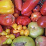 Festival de Tomates en el Valle del Guadalhorce